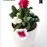 Et voilà: una composizione di piante grasse e gli schemi per farla !