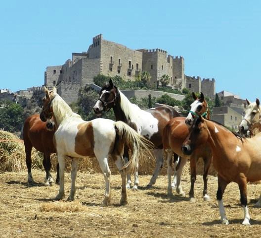 vendita-cavalli-sicilia