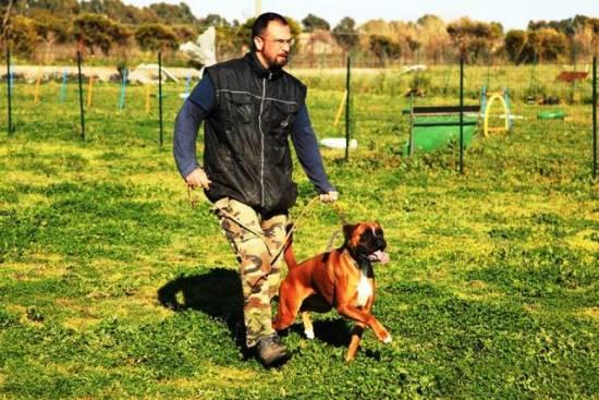 addestramento-cani-catania-cane-educato-2