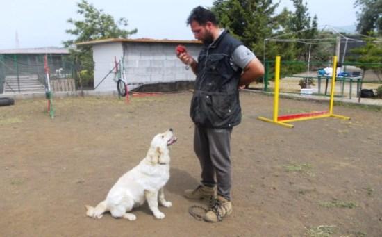 addestramento-cani-catania-cane-educato-3