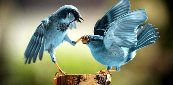 Twitter lancia l'opzione Nascondi
