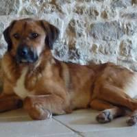 Adopter un chien à la SPA
