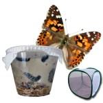 Soluzioni didattiche per scuole e Kit di allevamento farfalle