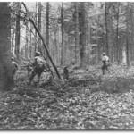 Hürtgen Forest