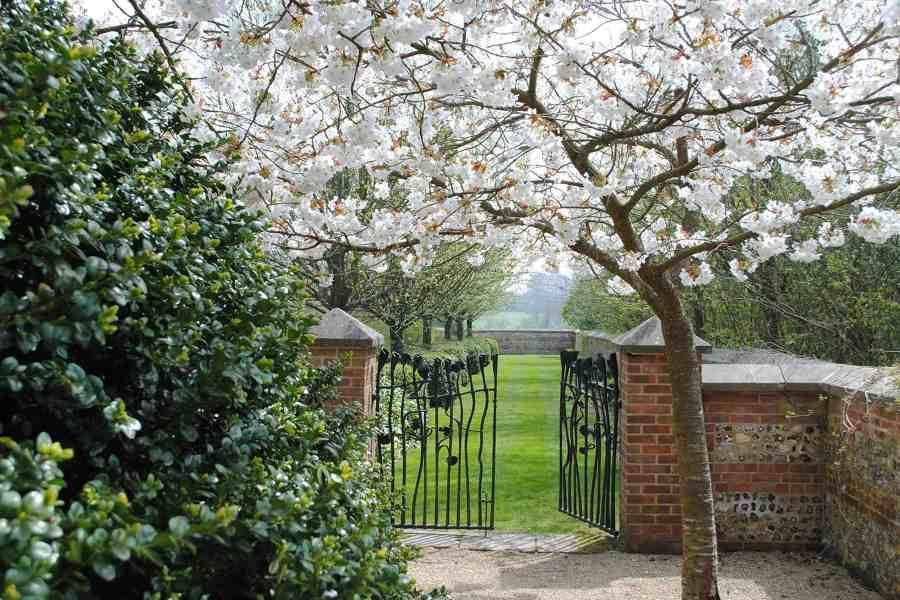 Cherry Blossom Farleigh Wallop