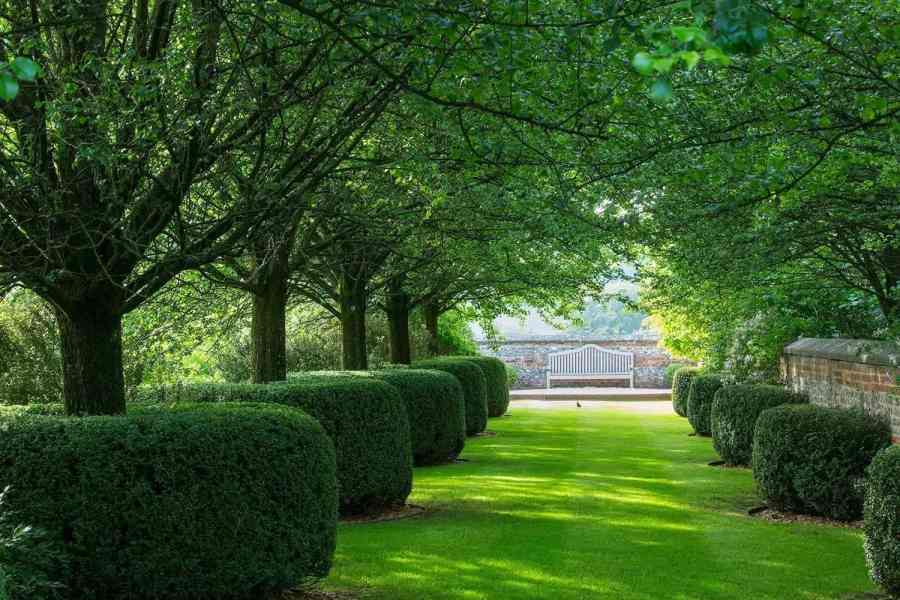 Cylindrically pruned Buxus sempervirens enclosing base of trees, Farleigh House,