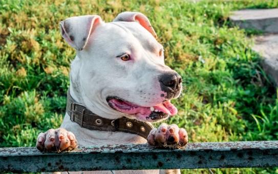 L'alitosi nel cane: le cause e le possibili soluzioni a questo disturbo