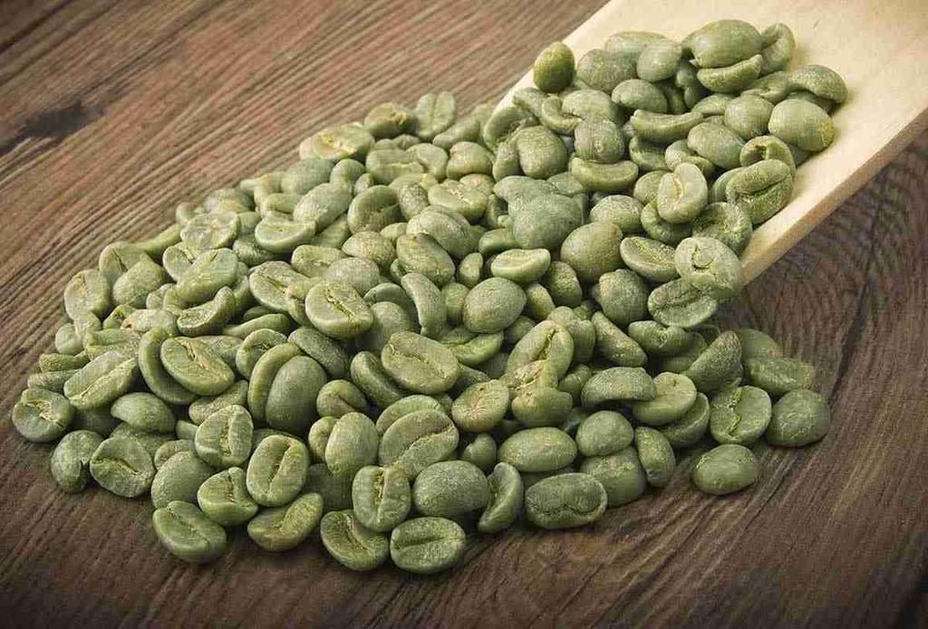 estratto di chicco di caffè verde per la perdita di grasso