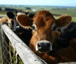 Cow-Calf Winter Preparation