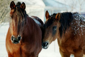winter horse care