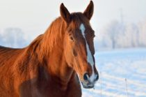 horses healthy this winter