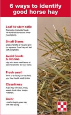 Six ways to identify good quality horse hay