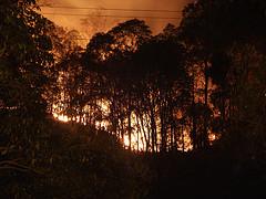 Bushfire aftermath bushfire smoke