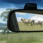2S14 - Laura MacDougall - Mirror Cattle