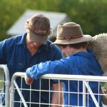 Two sheep Farmers - just another day. Image by: Brianna Bensch