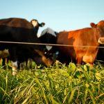 O062 - Healthy soil equals healthy tucker