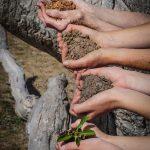 S001 - Generations will restore soil