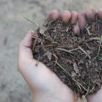 S013 - The love of soil