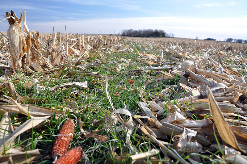 Park Your Plow: 5 Tips for the No-Till-Curious