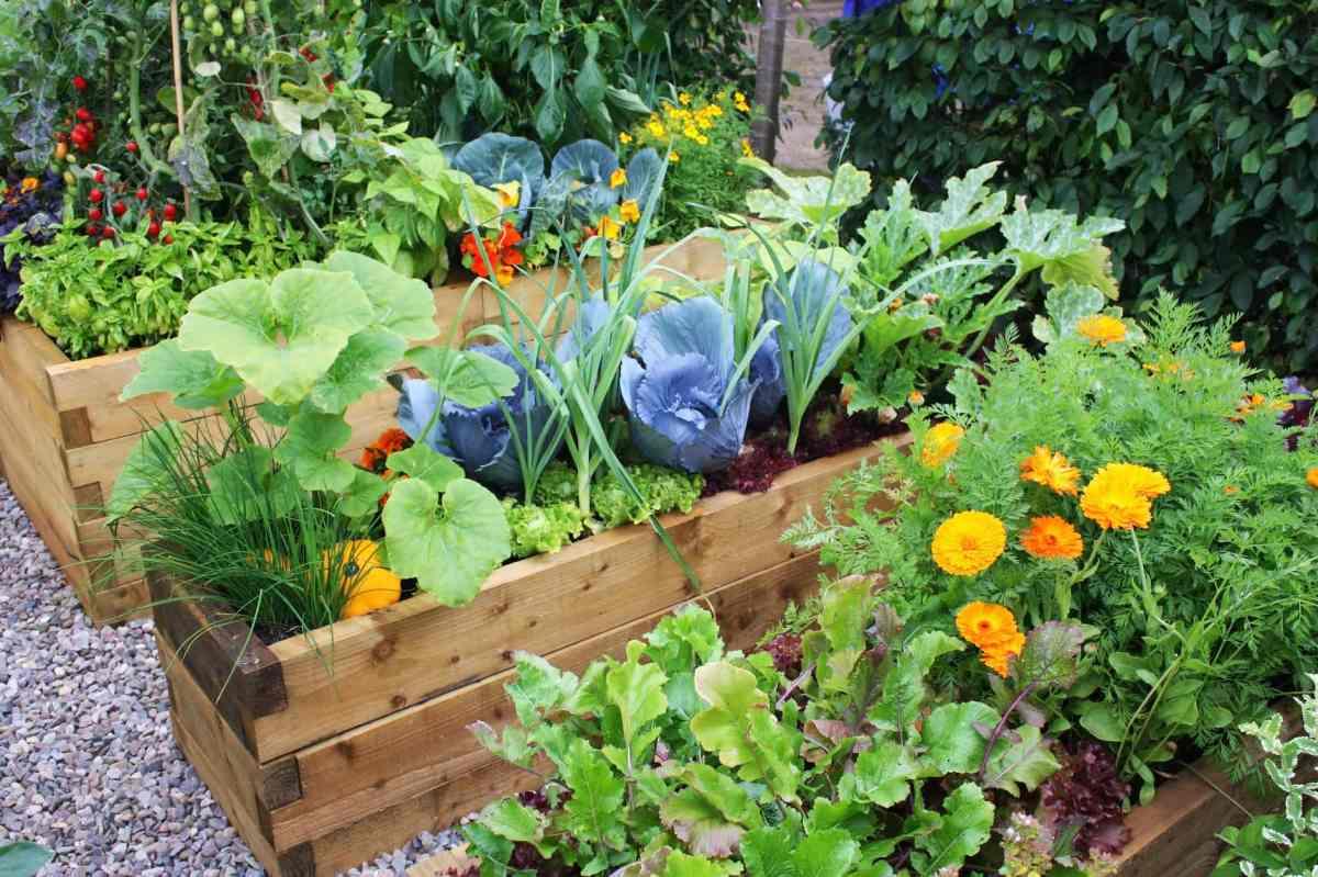 companion planting AdobeStock 21877595
