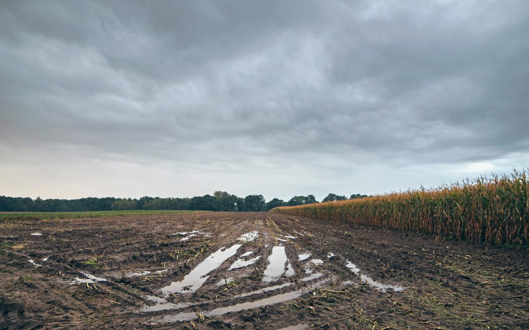7 Tips to Avoid Soil Compaction During Harvest