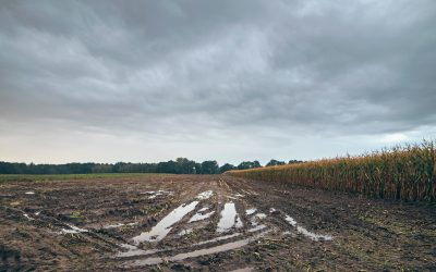 7 Tips to Avoid Rutting and Compaction on Wet Soils During Harvest