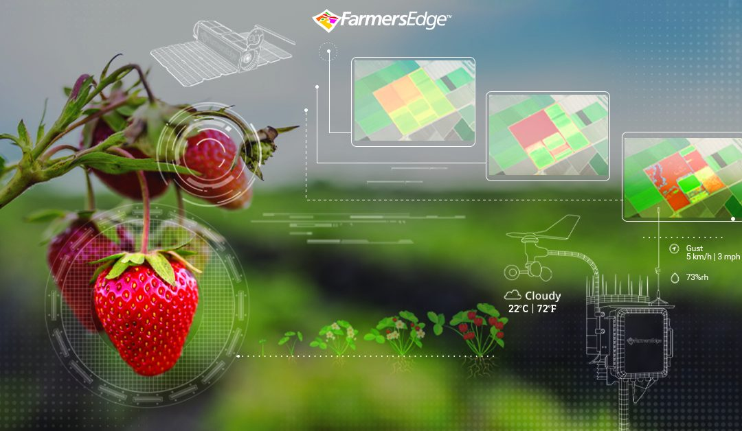 Farmers Edge Launches Daily Satellite Imagery with Automatic Health Change Detection for Specialty Crops