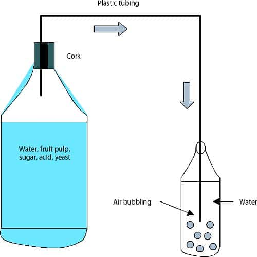Fermentation lock illustration