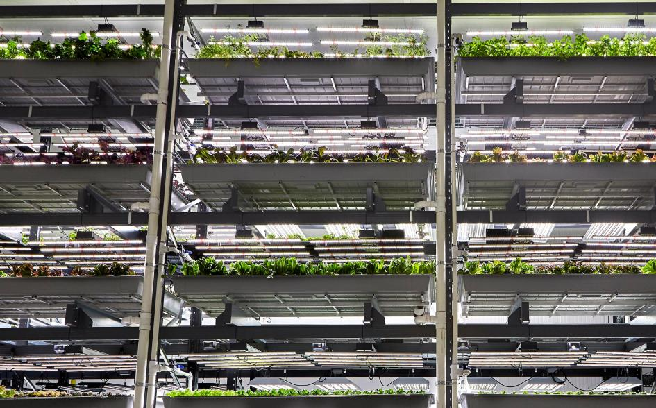 Your Greens Might Soon Be Grown in Warehouses
