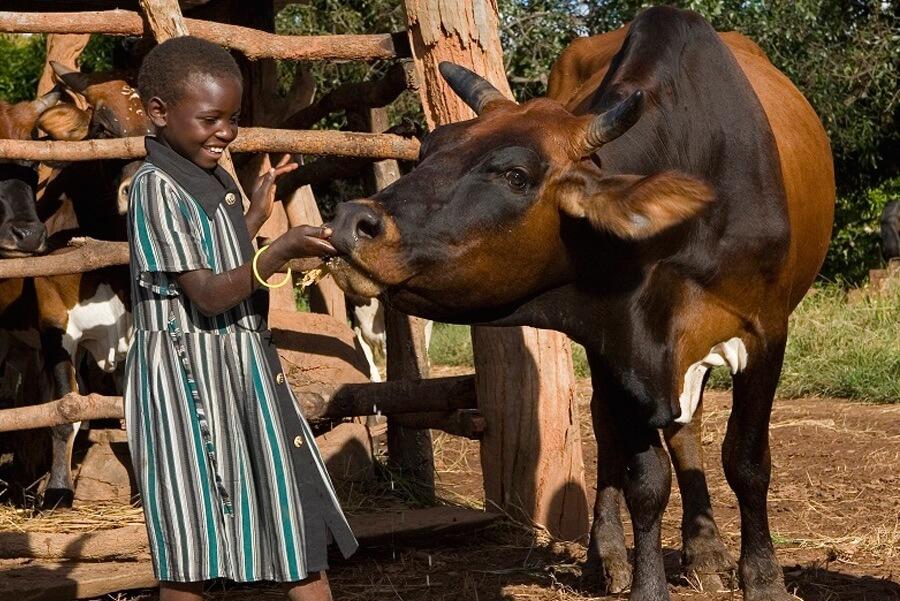 KALRO launches farmer information platforms using internet upgrade from Liquid Telecom Kenya