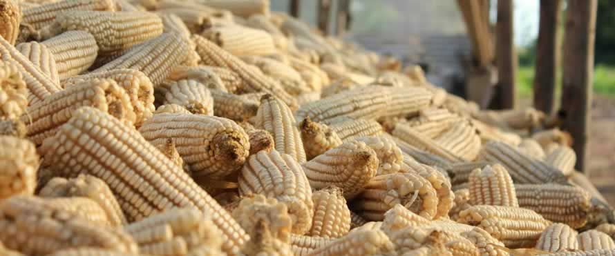 Zambia staple maize market fundamentals (October 2017)