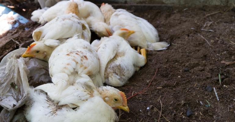 Avian Influenza : Threat over in Zimbabwe but on high alert