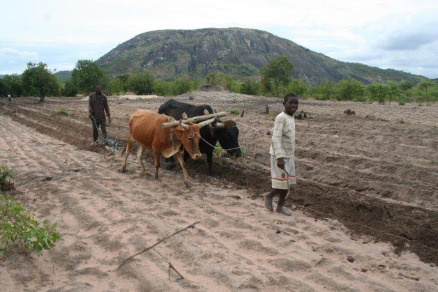 Zimbabwe : Errant farmers warned, again
