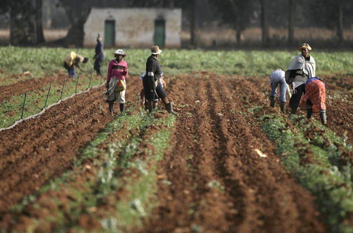 35 million euros to boost smallholder farming in DR Congo