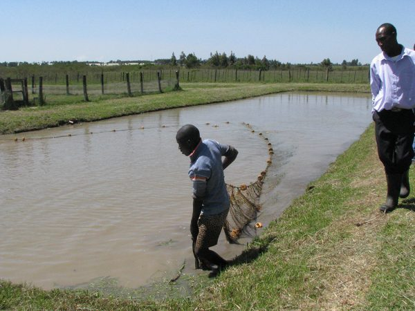 Aquaculture in Kenya