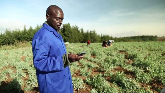 Digital farming in Kenya