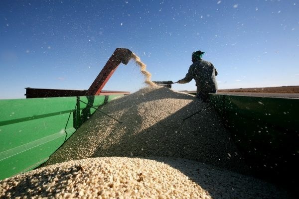 South Africa to experience higher maize yields than estimated