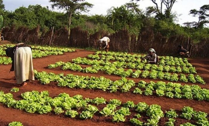Unchanged interest rates bode well for Agric sector