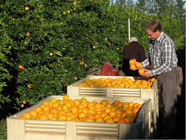 Ascendis Biosciences is proud sponsor of the 10th Citrus Research Symposium