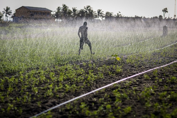 World Bank, AfDB to provide African governments with US $9Bn for the improvement of irrigation