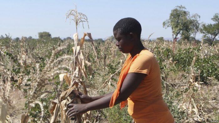Rising temperatures will push millions of people in Africa into poverty and hunger unless governments take swift action