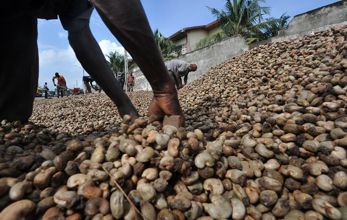 Tanzania pays US $434,687 to verified cashew farmers