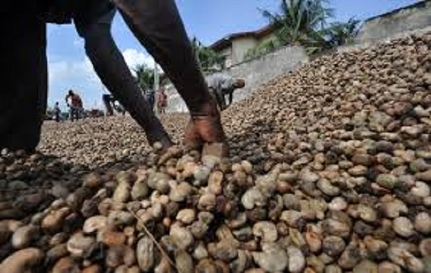 Tanzanian cashew farmers pocket approximately US $2.2Bn