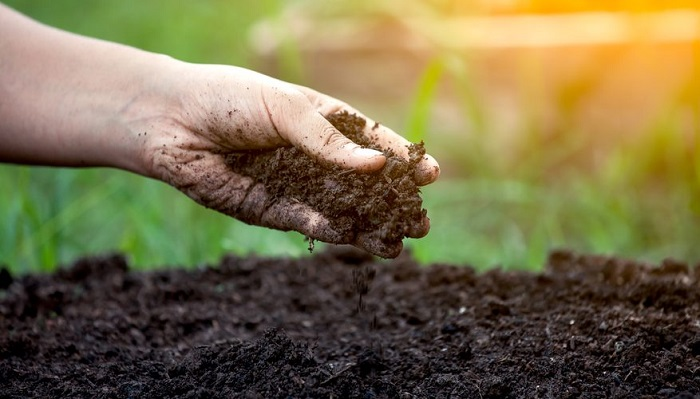 FAO highlights soil pollution as a threat to global food safety and security