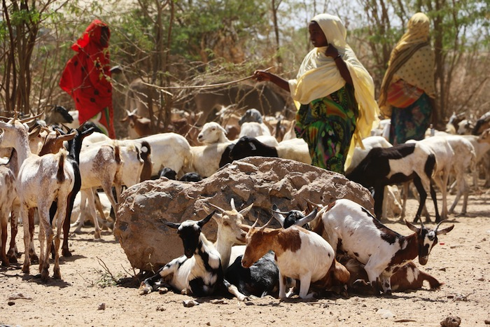 World Bank approves US $550m grant for Ethiopia's Low lands Livelihood Resilience Project