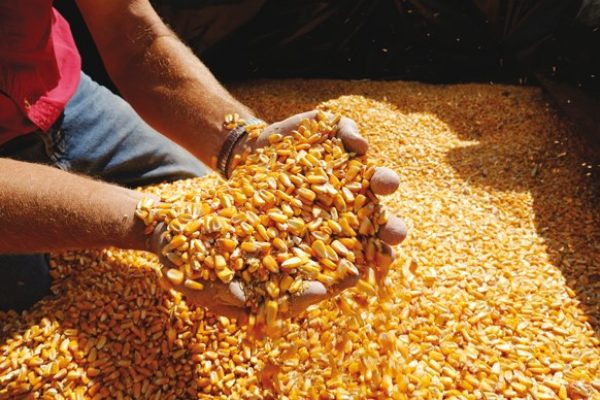 Shaping agriculture through new seed varieties and innovative seed-applied technologies