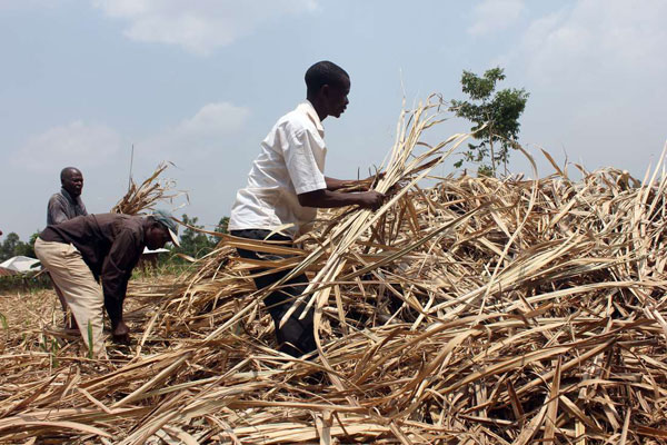 Sugar farmers chase government to follow law in forming regulations