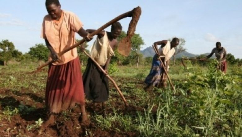 7th Tokyo International Conference on African Development (TICAD7): Invest in Africa's food markets to win the war on hunger and boost nutrition – African Development Bank