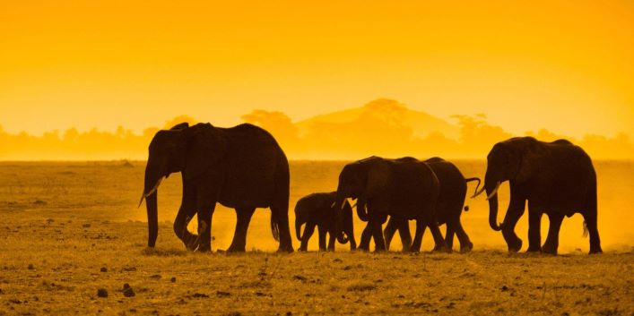 CITES to vote this weekend on whether to ban live trade in elephants worldwide