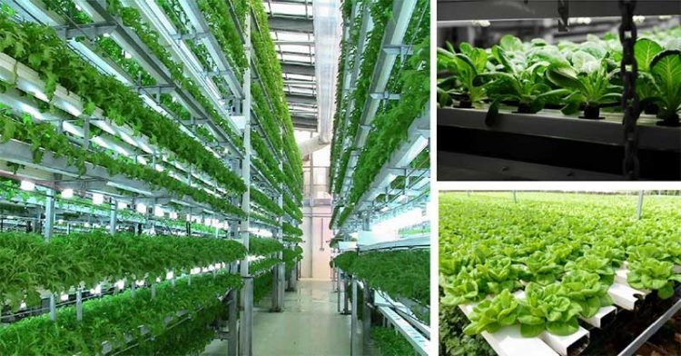 Vertical Farming Market is anticipated to reach US$ 9 Bn by 2026